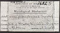 Polyporus pennsylvanicus image