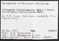 Coriolopsis caperata image