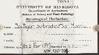 Polyporus melanopus image