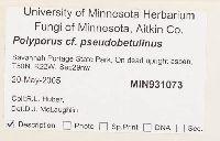 Polyporus pseudobetulinus image