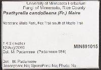 Psathyrella candolleana image