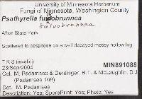 Psathyrella fulvobrunnea image