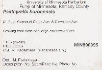 Psathyrella huronensis image