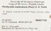 Psathyrella madeodisca image
