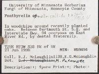 Psathyrella melleipallida image