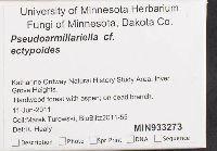 Pseudoarmillariella ectyloides image