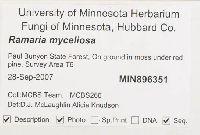 Ramaria myceliosa image