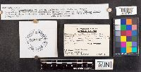 Ramariopsis asterella image