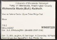 Rickenella fibula image