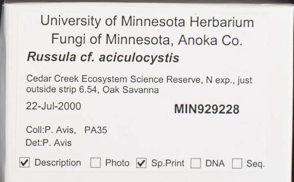 Russula aciculocystis image