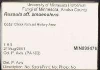 Russula amoenolens image