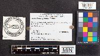 Russula appalachiensis image