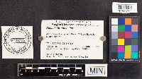 Russula brunneoalba image