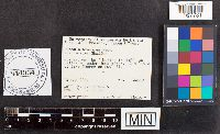 Russula brevipes var. acrior image