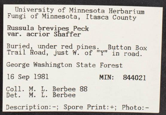 Russula brevipes image