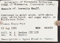 Russula borealis image