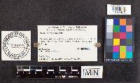 Image of Russula fucosa