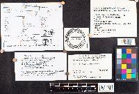 Russula michiganensis image