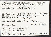 Russula paludosa image