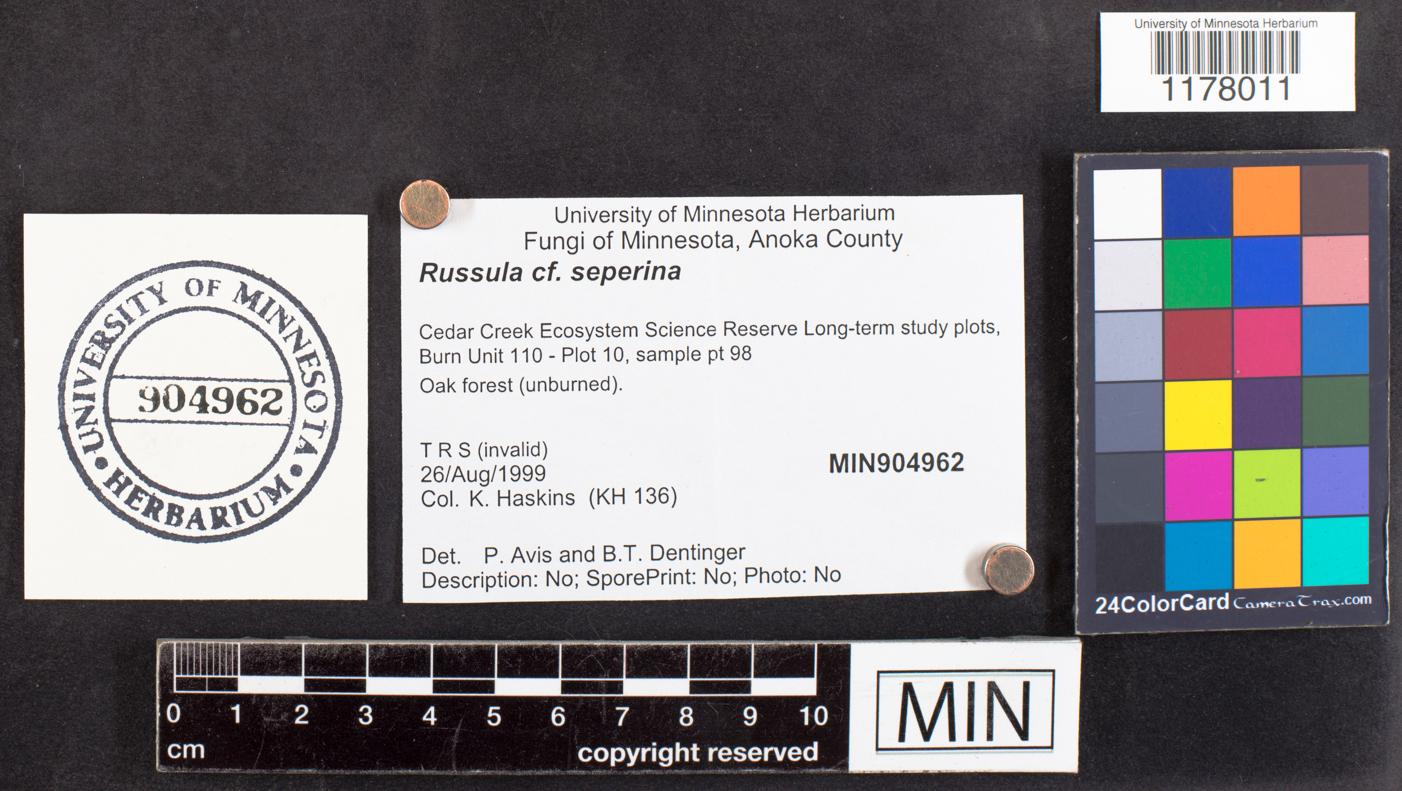 Russula seperina image