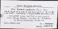 Porostereum spadiceum image