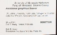 Ascobolus geophilus image