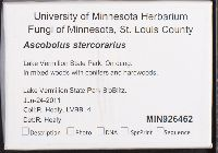 Ascobolus stercorarius image