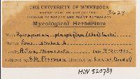 Apiosporium pinophilum image