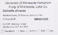 Catinella olivacea image
