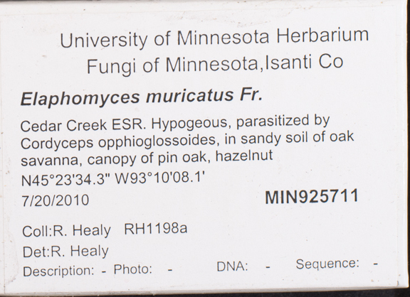 Elaphomyces image
