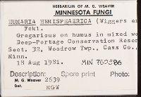 Humaria hemisphaerica image