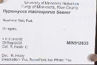 Hypomyces macrosporus image