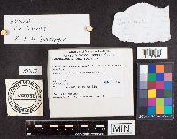 Cortinarius atkinsonianus image