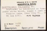 Cortinarius delibutus image