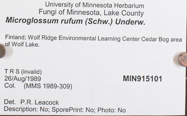 Microglossum image
