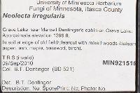 Neolecta irregularis image