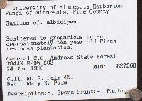 Suillus albidipes image
