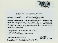 Mycocalicium subtile image