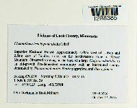 Chaenotheca brachypoda image