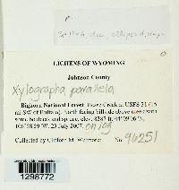 Xylographa parallela image