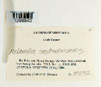 Melanohalea septentrionalis image