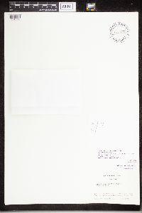 Image of Diplotomma dispersum