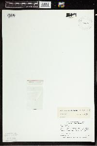 Wolffia borealis image